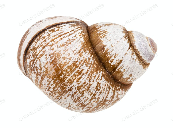 shell of snail isolated on white