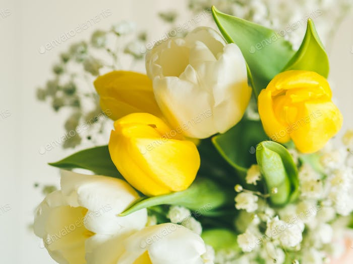 White and yellow tulips. Greeting card