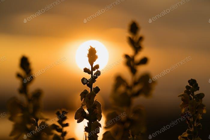 Sunset background for meditation