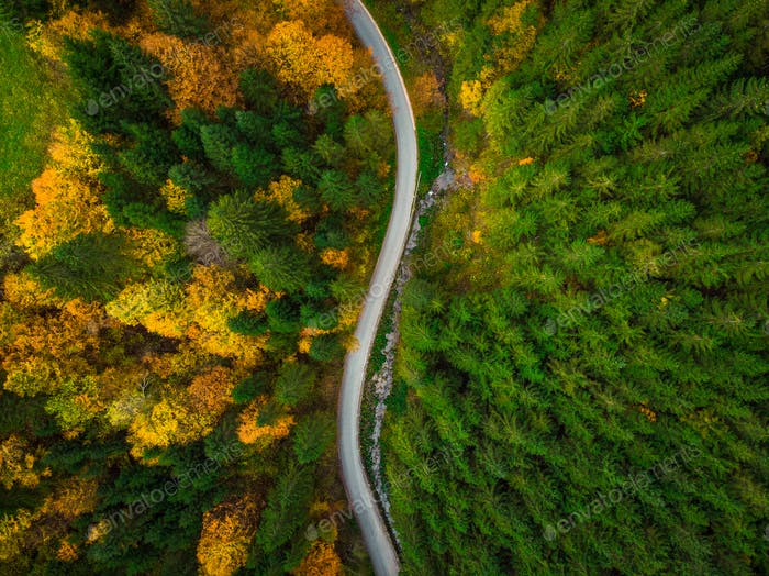 Colorful forest and curvy road, aerial drone view from above