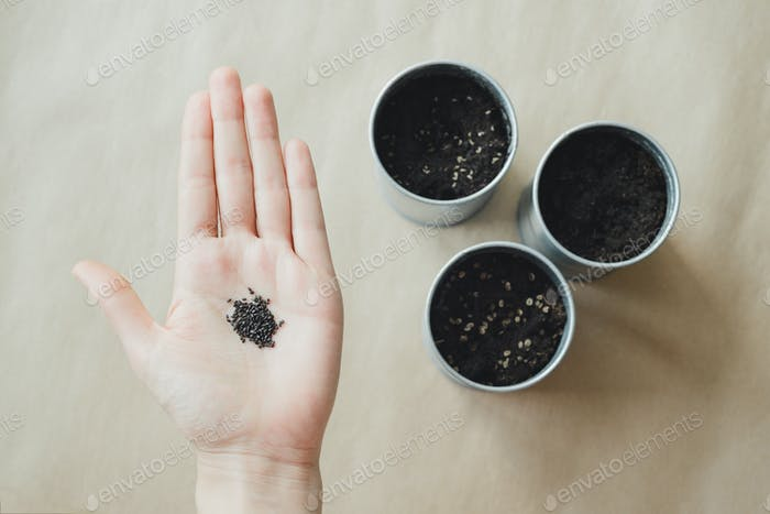 womans hand holding basil plant seeds over metallic pot with soil