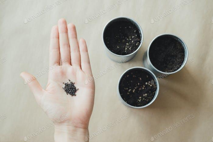 Frauen Hand hält Basilikum Pflanzensamen über metallischen Topf mit Erde