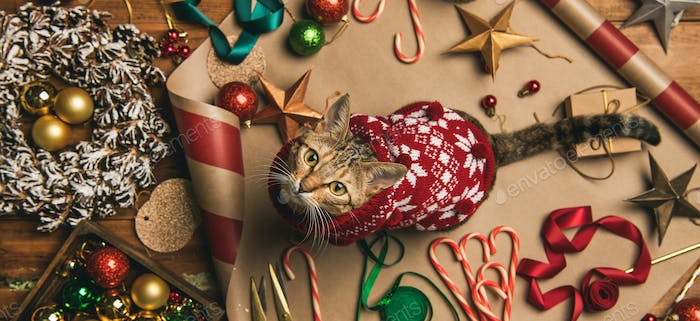 Flat-lay of Christmas decorations and cat in sweater, wide composition