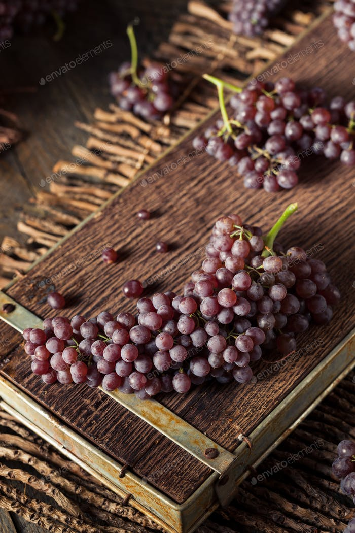 Raw Organic Table Champagne Grapes