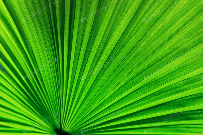 Green palm leaf for background