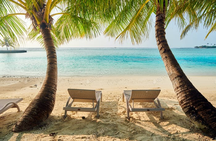 Tropical beach with loungers and palm trees