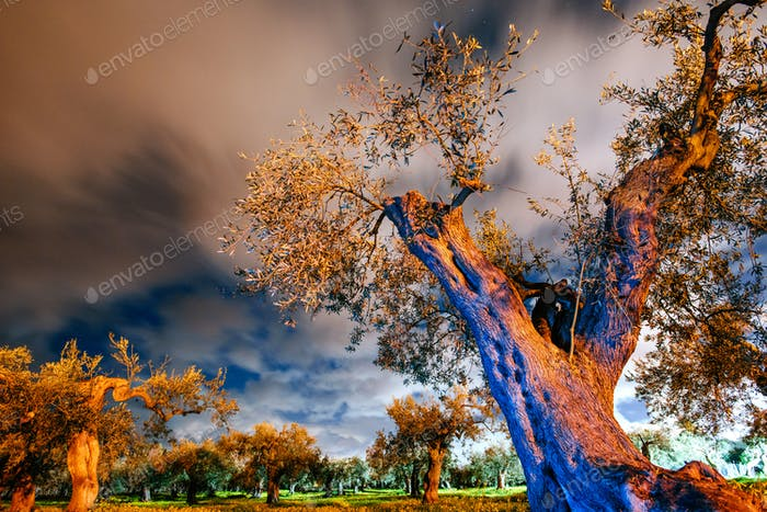 Yellow tree and starry sky