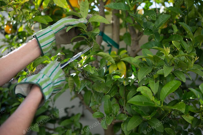 Woman pruning plants in garden