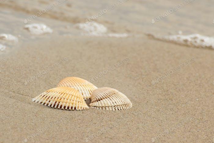 Seashells at beach by sea, summer and vacation concept