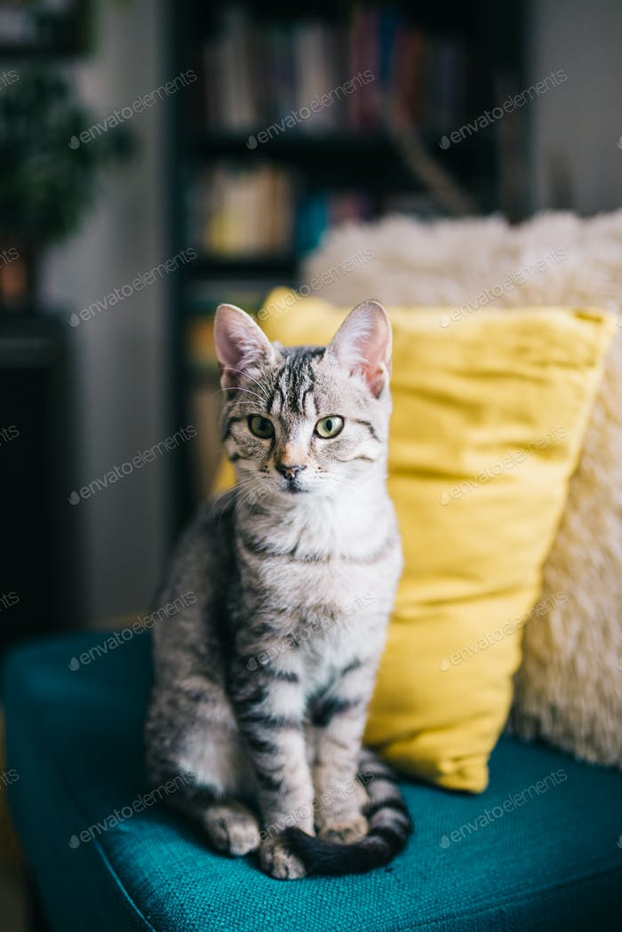 Niedliche junge Katze sitzend