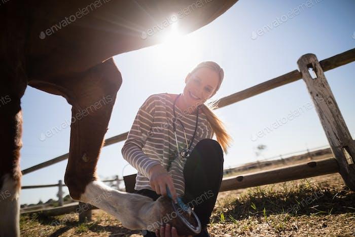 Smiling female vet attaching shoe on horse foot