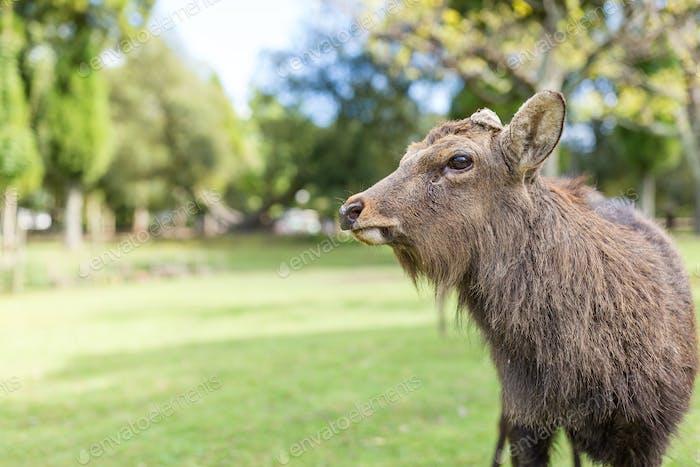 Cute male deer