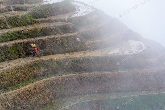 Guilin, China Reisterrasse