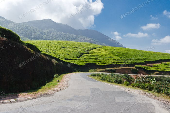 Road in tea plantations