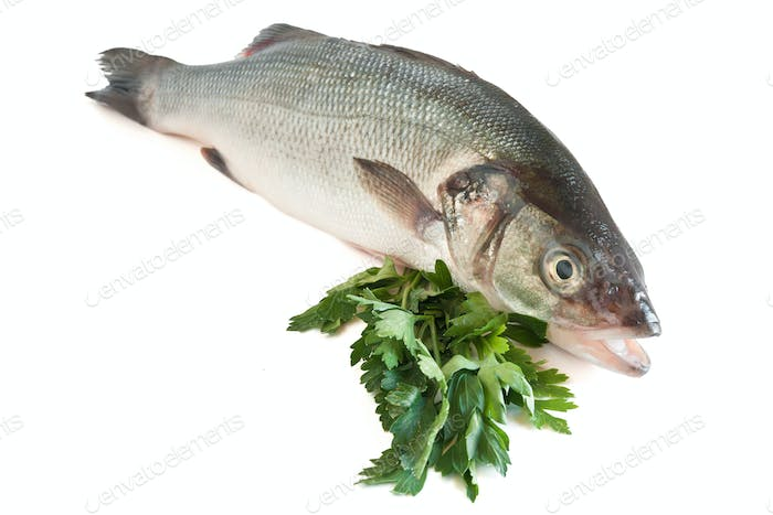 Sea bass with parsley