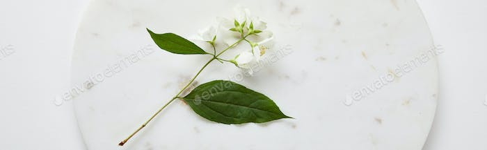 panoramic shot of plate with jasmine on white surface