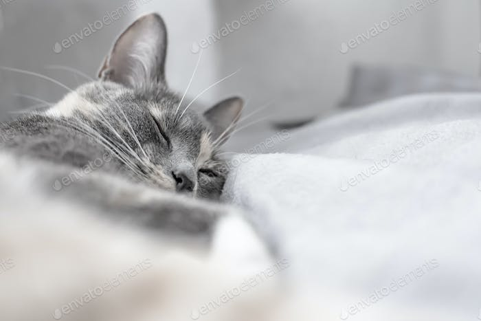 Young cute cat sleeps on a soft plaid