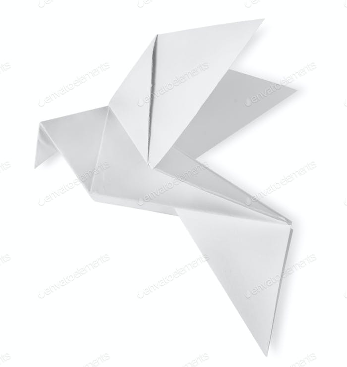 Bird paper isolated