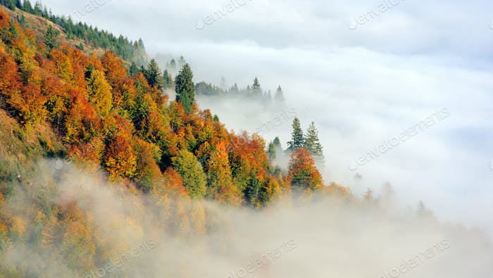 Forest on the mountain slope with fog