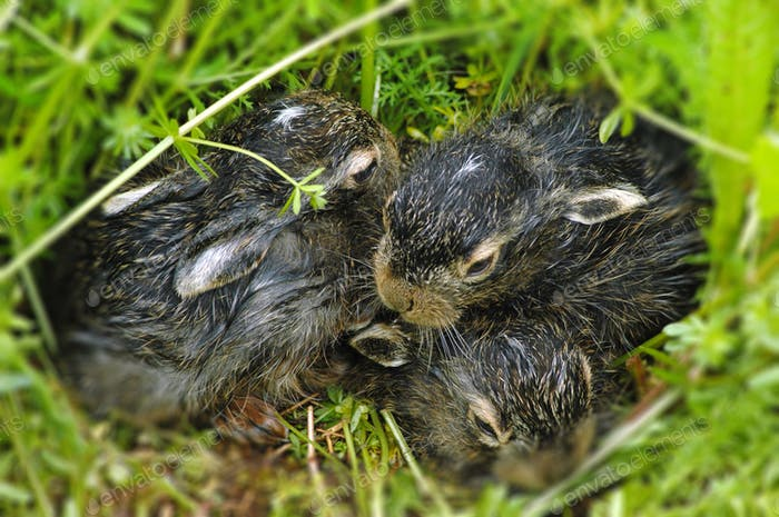 Newborn baby bunnies in the grass. Easter theme