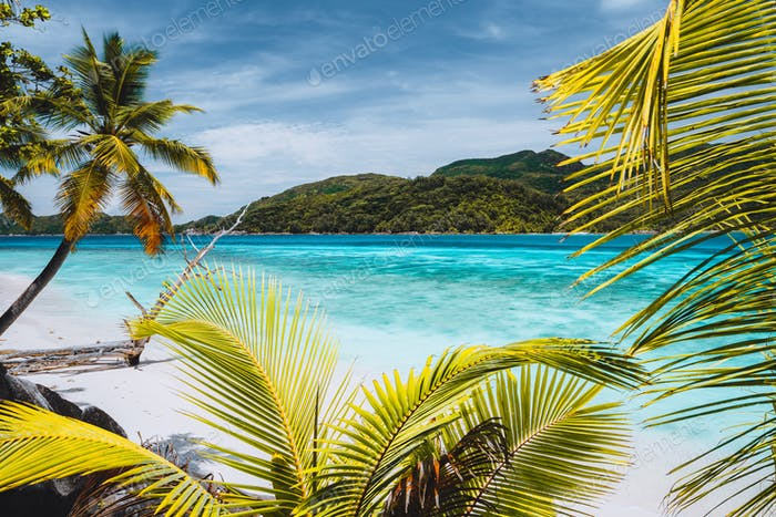 Vacation holiday background exotic wallpaper. Palm trees on tropical beach. Blue ocean lagoon and