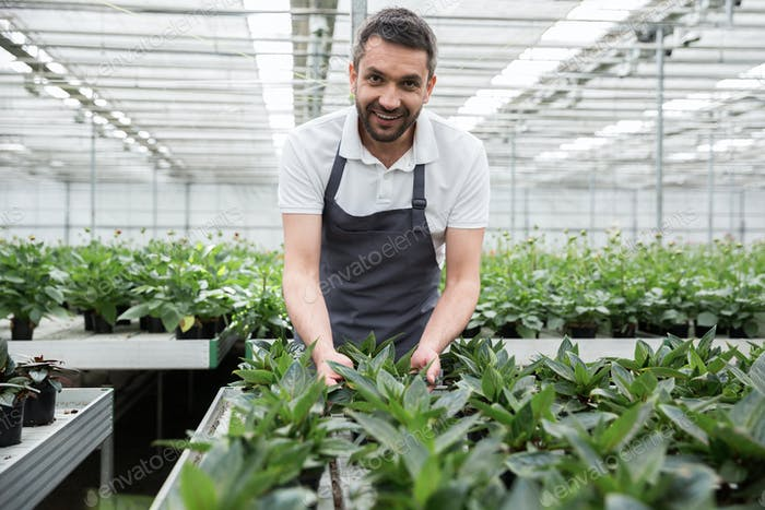 Handsome smiling young bearded man standing in greenhouse