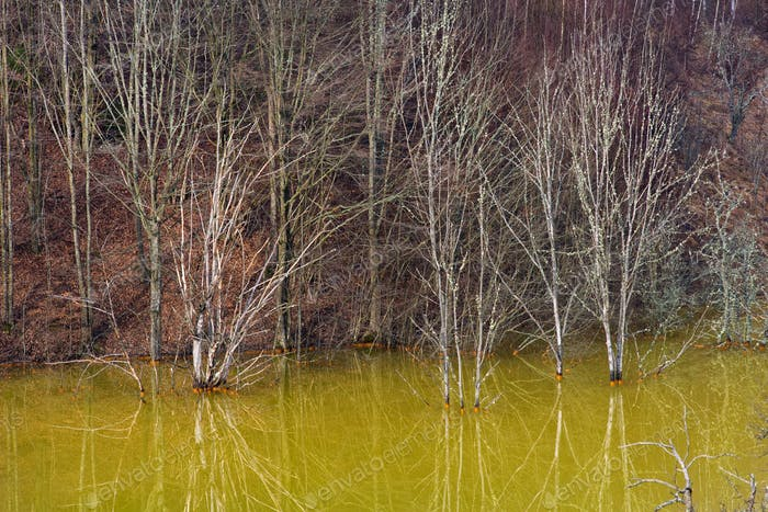 Green pollution lake with mining gold and copper residuals