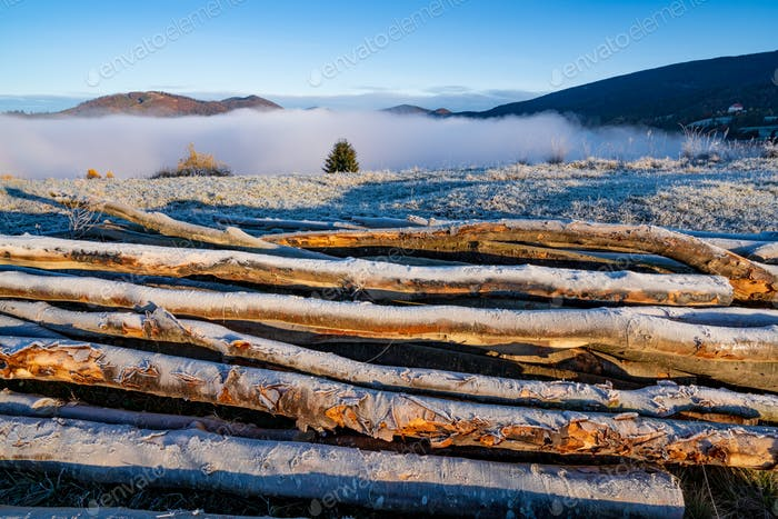 Felled trees lie on the ground in cold weather in the early morning