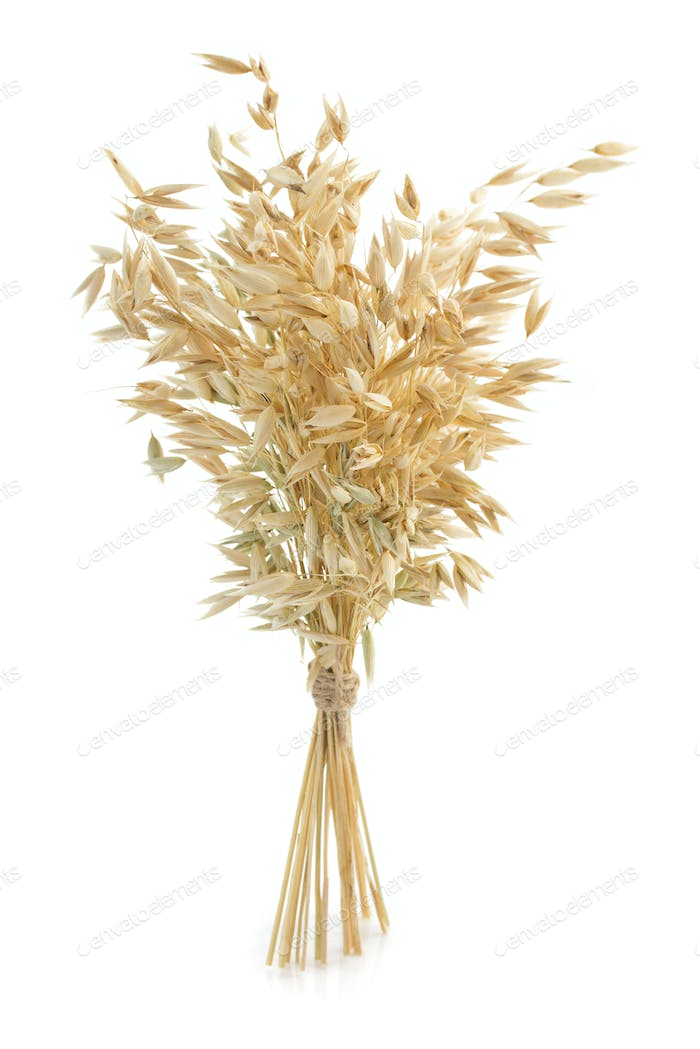 oat ears isolated on white