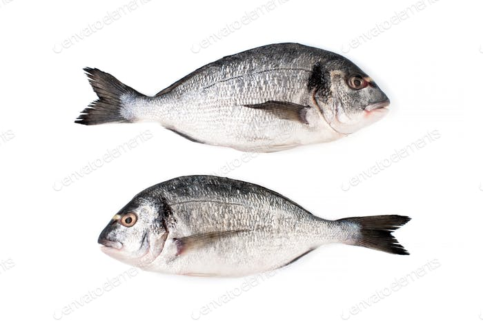 Two fresh Dorado fish on a white background. Isolated.