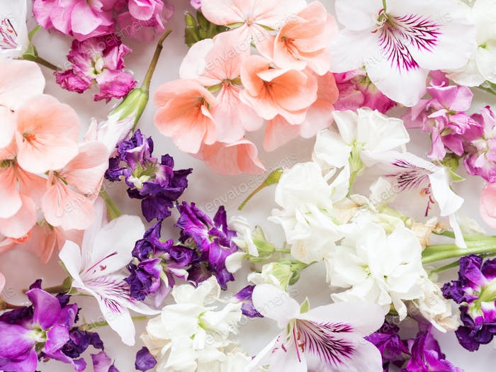 Beautiful pink and white flowers in water