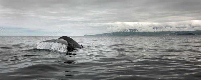 Whale tail splashing in ocean water