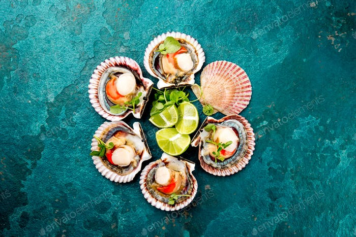 Raw opened shellfish scallops on turquoise background. Top view. Seafood concept.