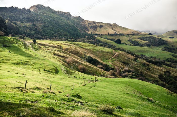 Lush green landscape of New Zealand