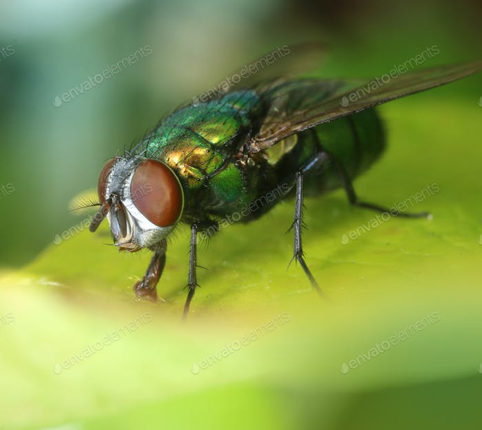 Colorful fly on green leaf