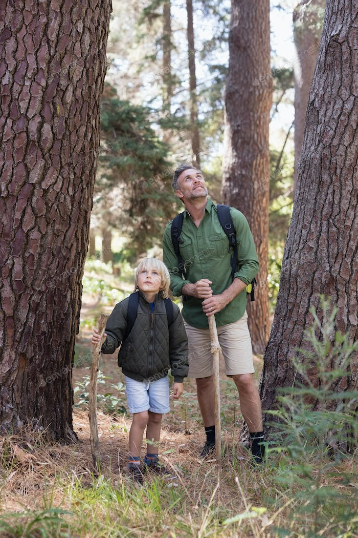 Father and son discovering nature in forest