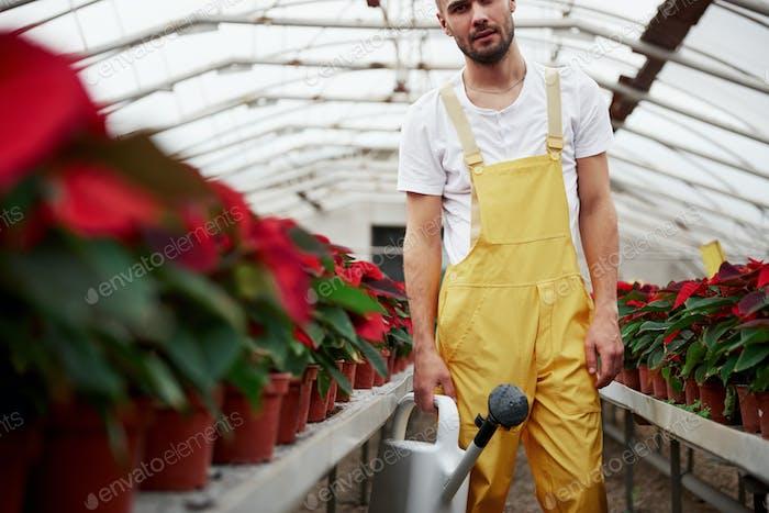 Liebesabschnitt des Fotos mit schönem jungen Kerl im Treibhaus, der sich um Blumen kümmert
