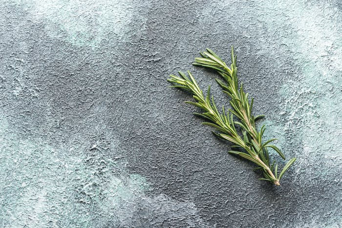 Fresh rosemary on navy background