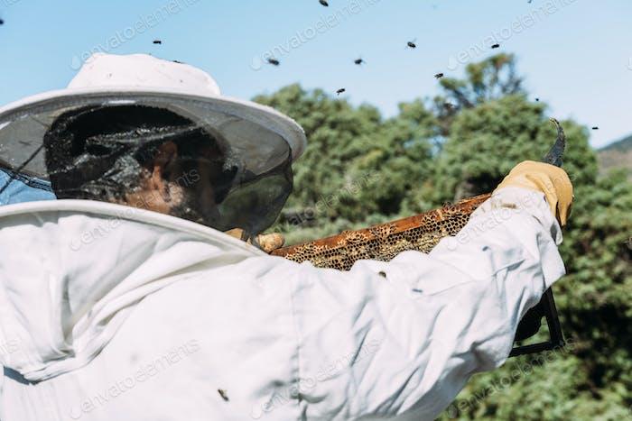 Beekeeper working collect honey.