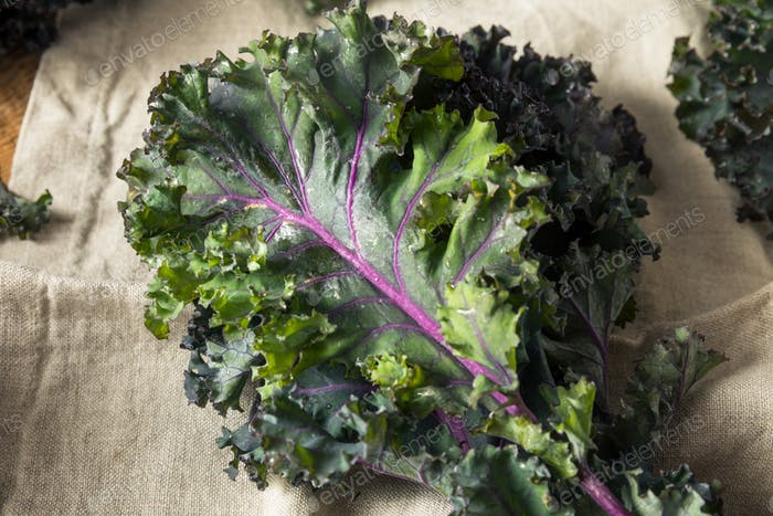 Organic Healthy Red Kale