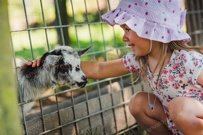 Small child peting little goat throug fance