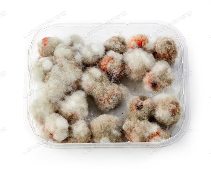 raspberries with mold