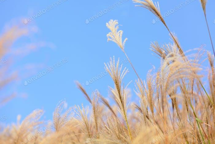 Gras im Herbst