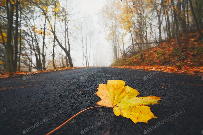 Fallen leaf on the road