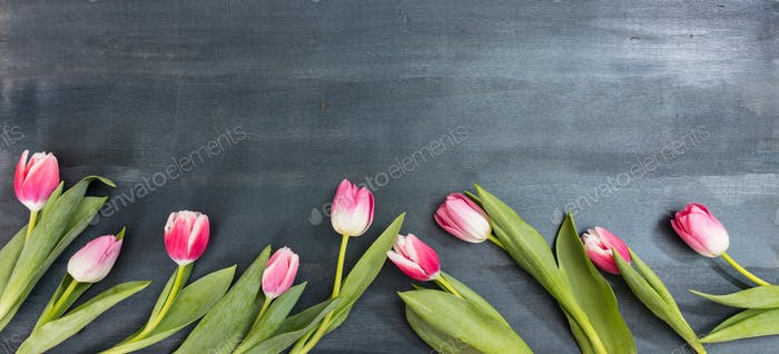 Womens day. Pink tulips on blue background, copy space, top view, banner