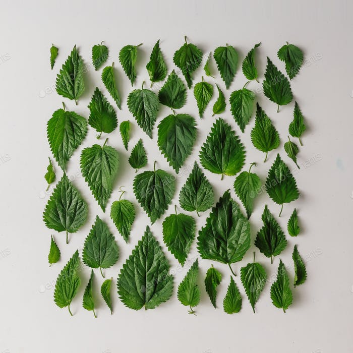 Creative nettle leaves pattern . Minimal nature concept. Flat lay. Green herbs texture.