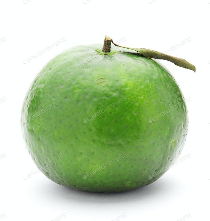 grüne Limette Zitrusfrüchte