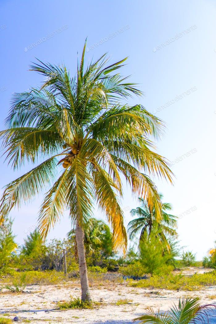 Palm trees on white sand beach