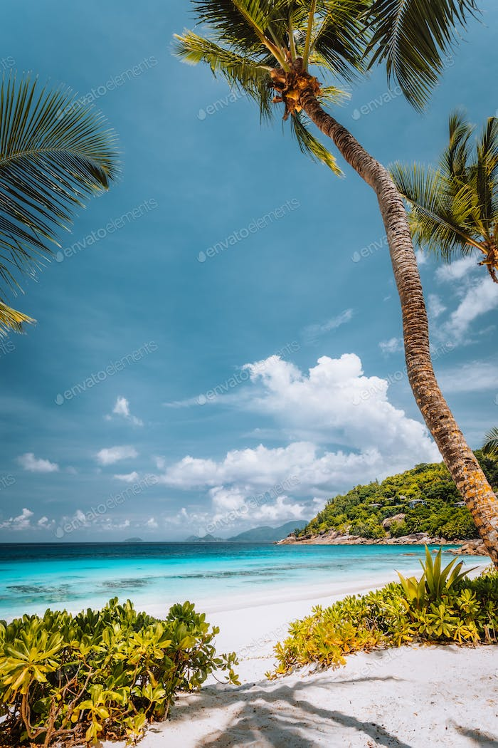 Tropical sandy beach with blue ocean and palm trees at Mahe island, Seychelles. Carefree relax