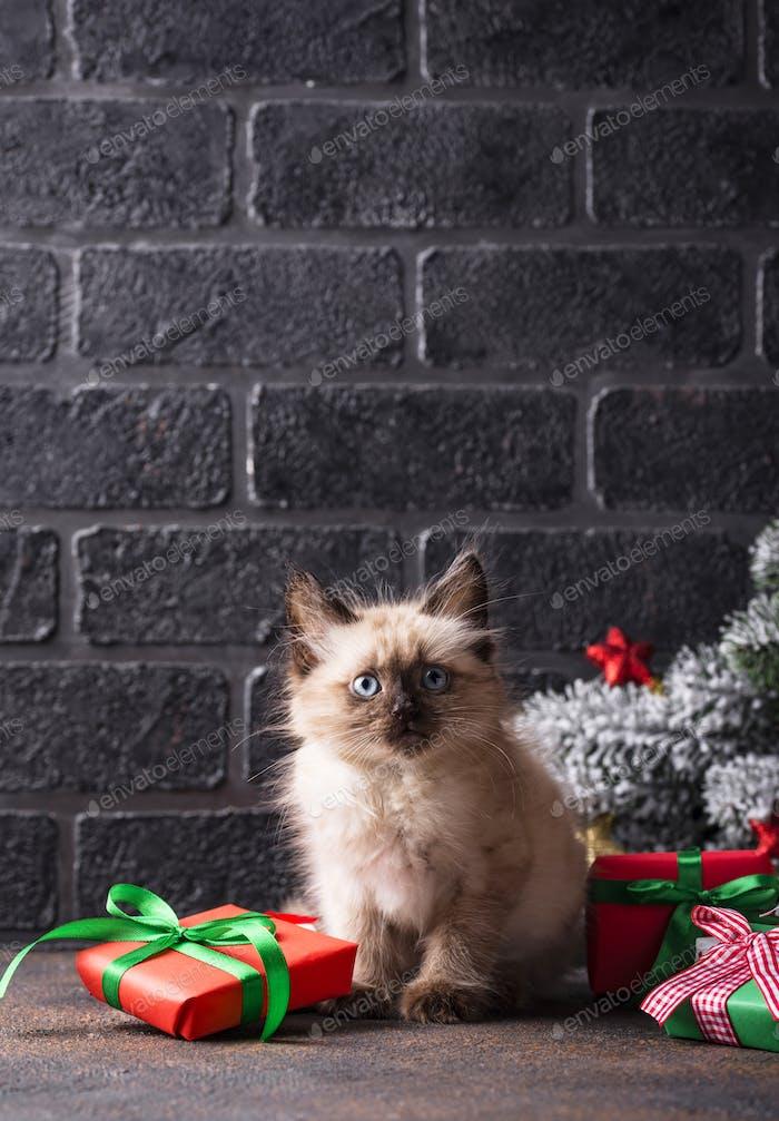 Забавный котенок рядом и подарочные коробки